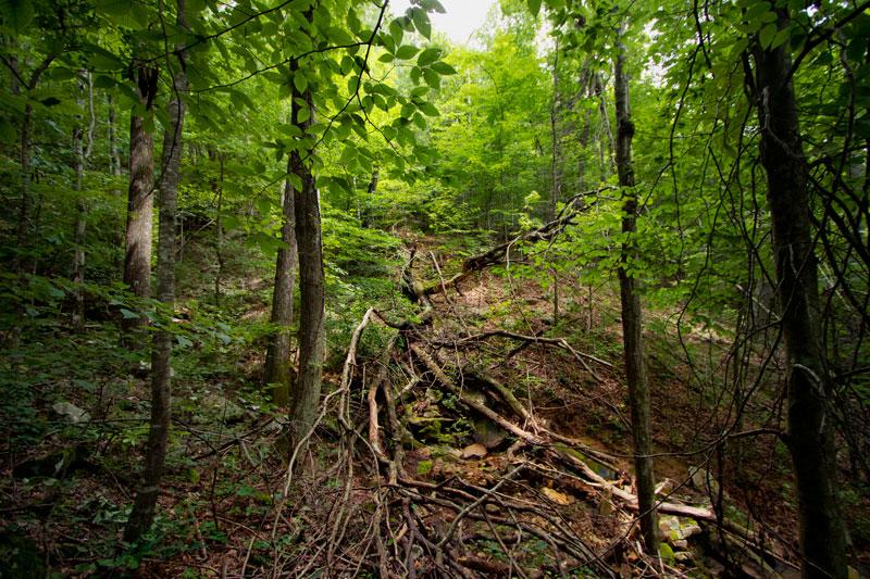 Sasquatch Farm Hiking Trails
